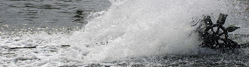גרימת מוות ברשלנות – התחשמלו למוות בזמן עבודתם בבריכת דגים