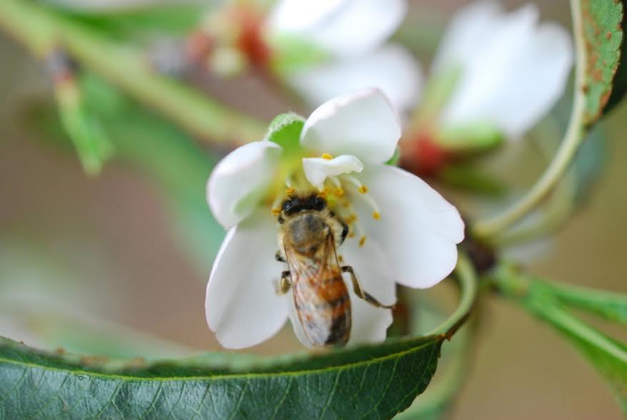 """מועצת הדבש מזמינה אתכם לחגוג את ט""""ו בשבט ולשמור על הדבורים"""