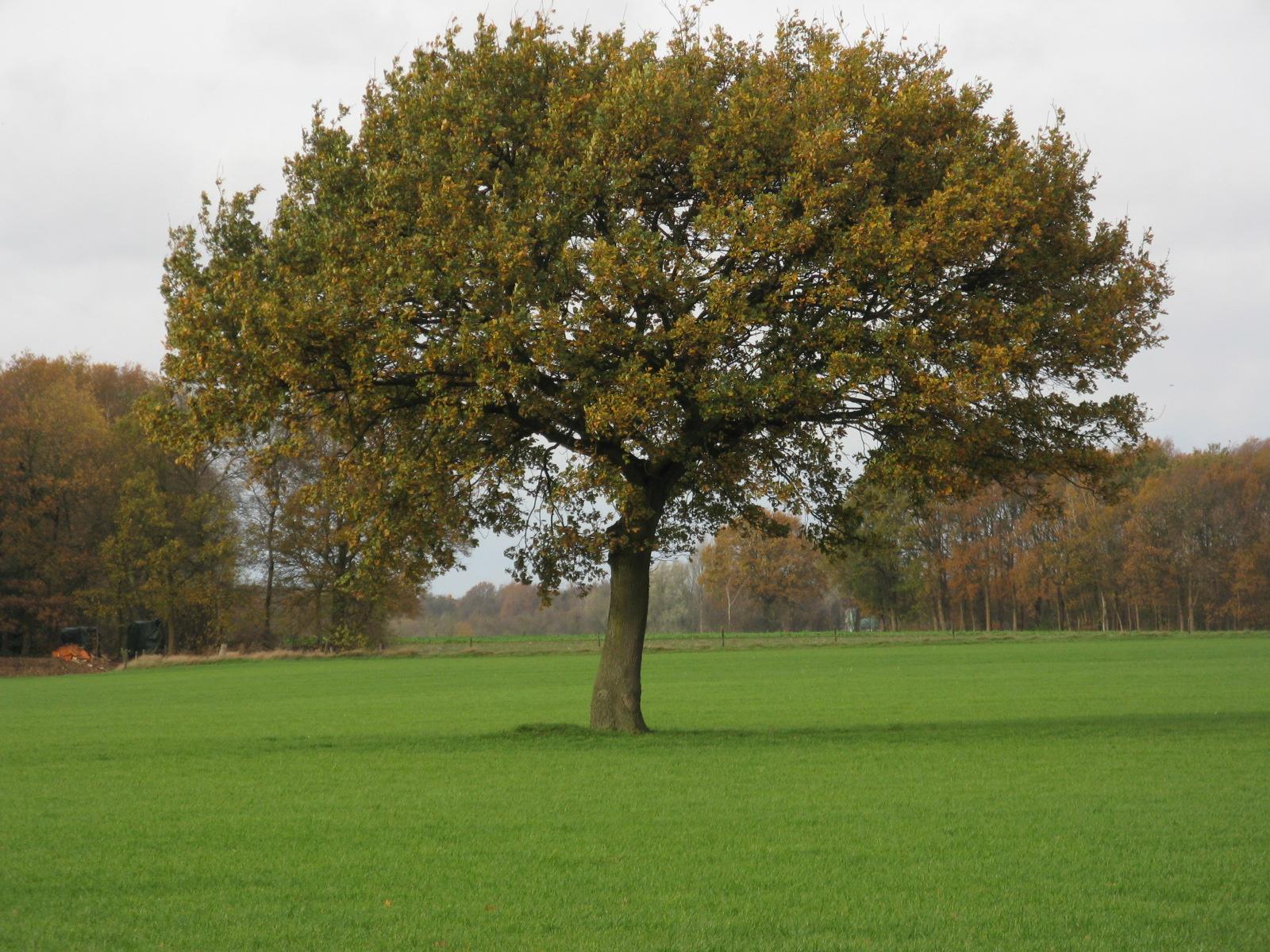 """מחבקת העצים: """"ההנאה הכי גדולה שלה היא להיות קרובה לעצים ולחקלאים"""""""