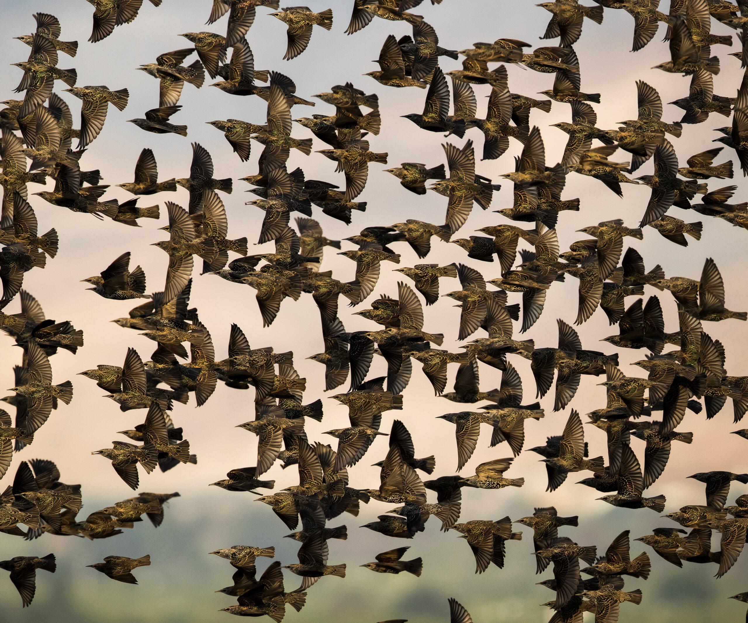 מחקר חדש ופורץ דרך שנערך בחוג למדעי החי במכללה האקדמית תל-חי בדק כיצד יודעות הציפורים את כיוון הנדידה