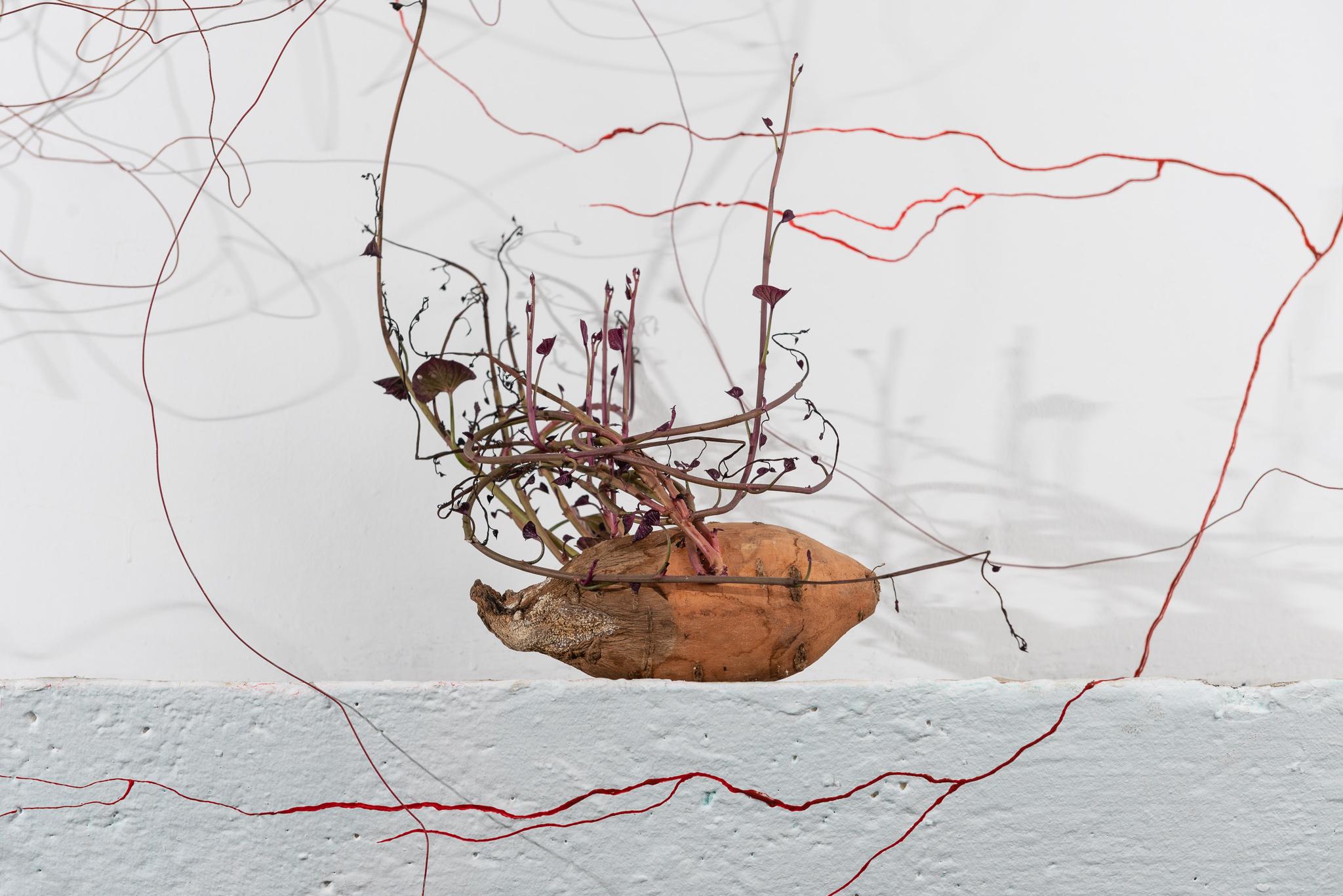 חומר מקומי 2020: תערוכת הגמר של המכון לאמנויות תל-חי