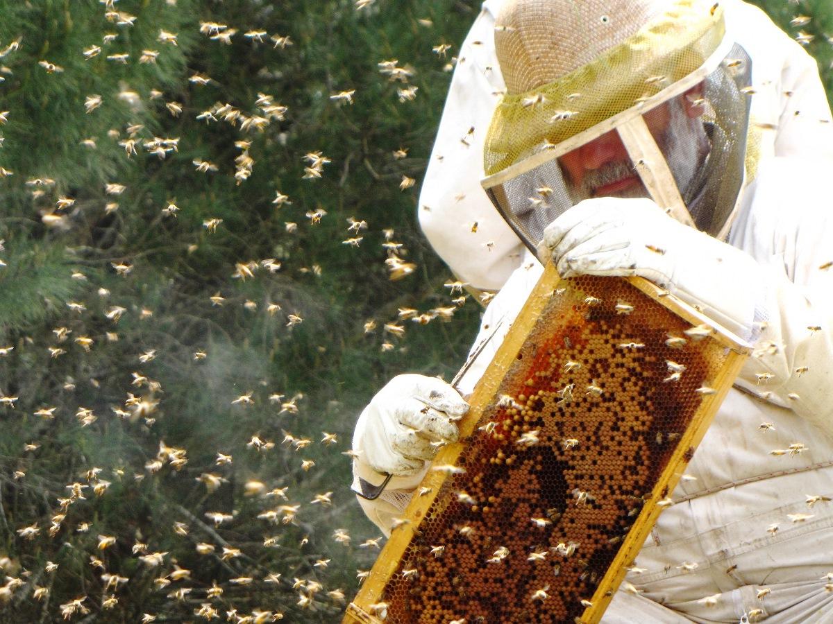 מועצת הדבש: לקראת ראש השנה תמכו בתוצרת הארץ בקנייה ישירה של דבש מדבוראי ישראל
