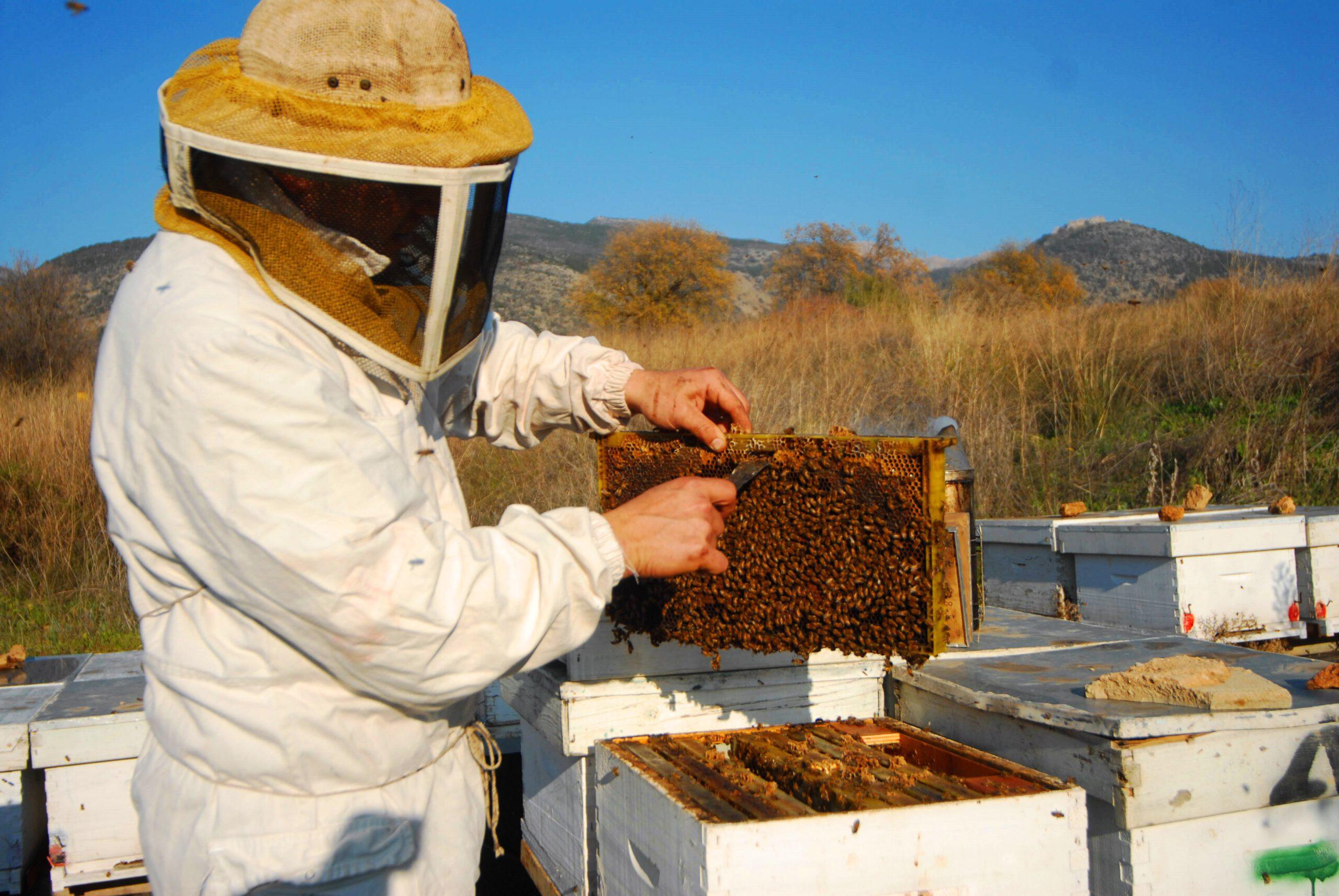 מועצת הדבש: דבורי הדבש ממשיכות להפתיע עם מחקר חדש הקובע כי הארס המועבר בעקיצת הדבורה מסוגל להרוג תאי סרטן שד