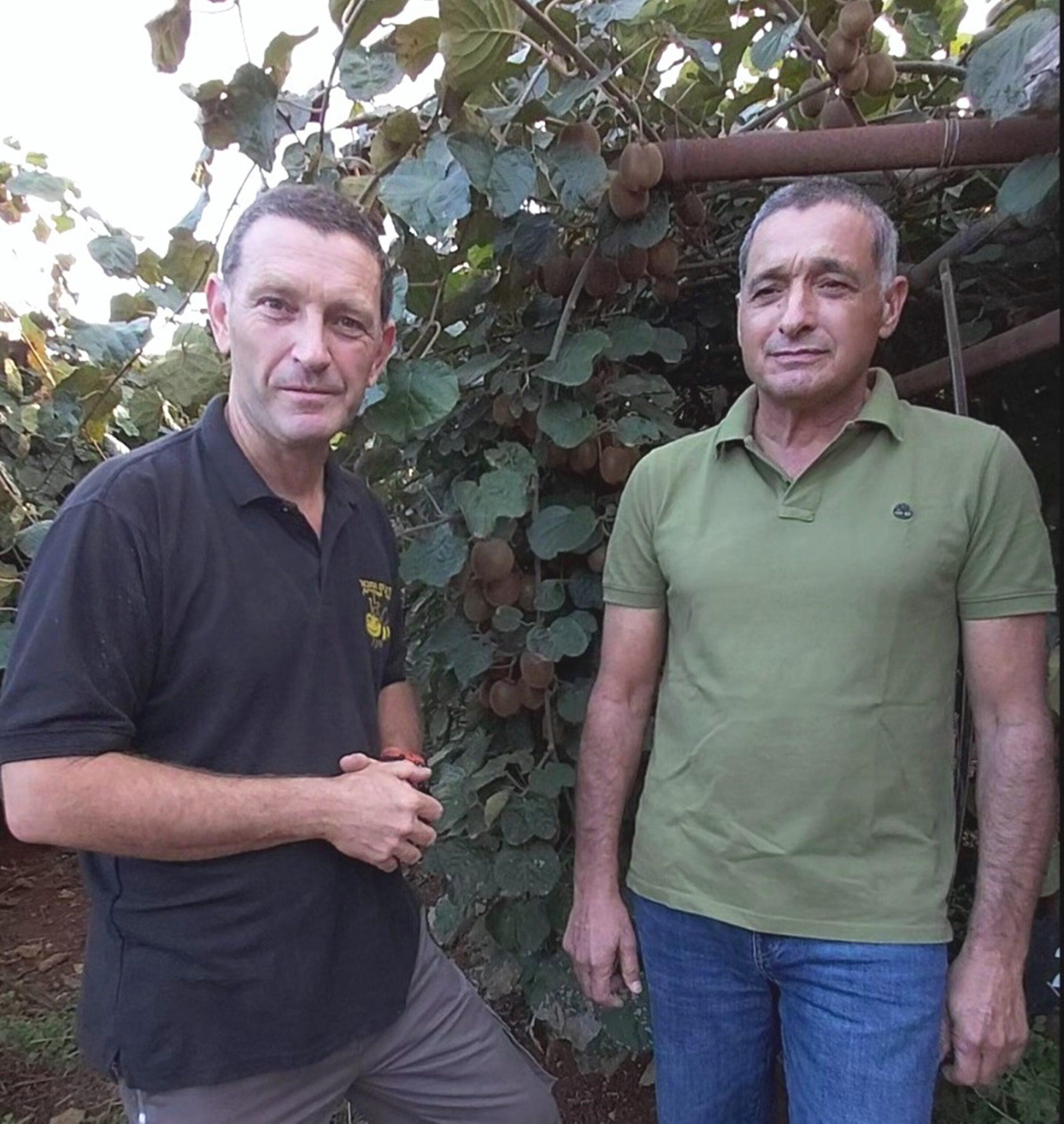 """ירון בלחסן מנכ""""ל ארגון מגדלי הפירות בישראל בסיור לדבוראים במטעי הקיווי במלכיה"""