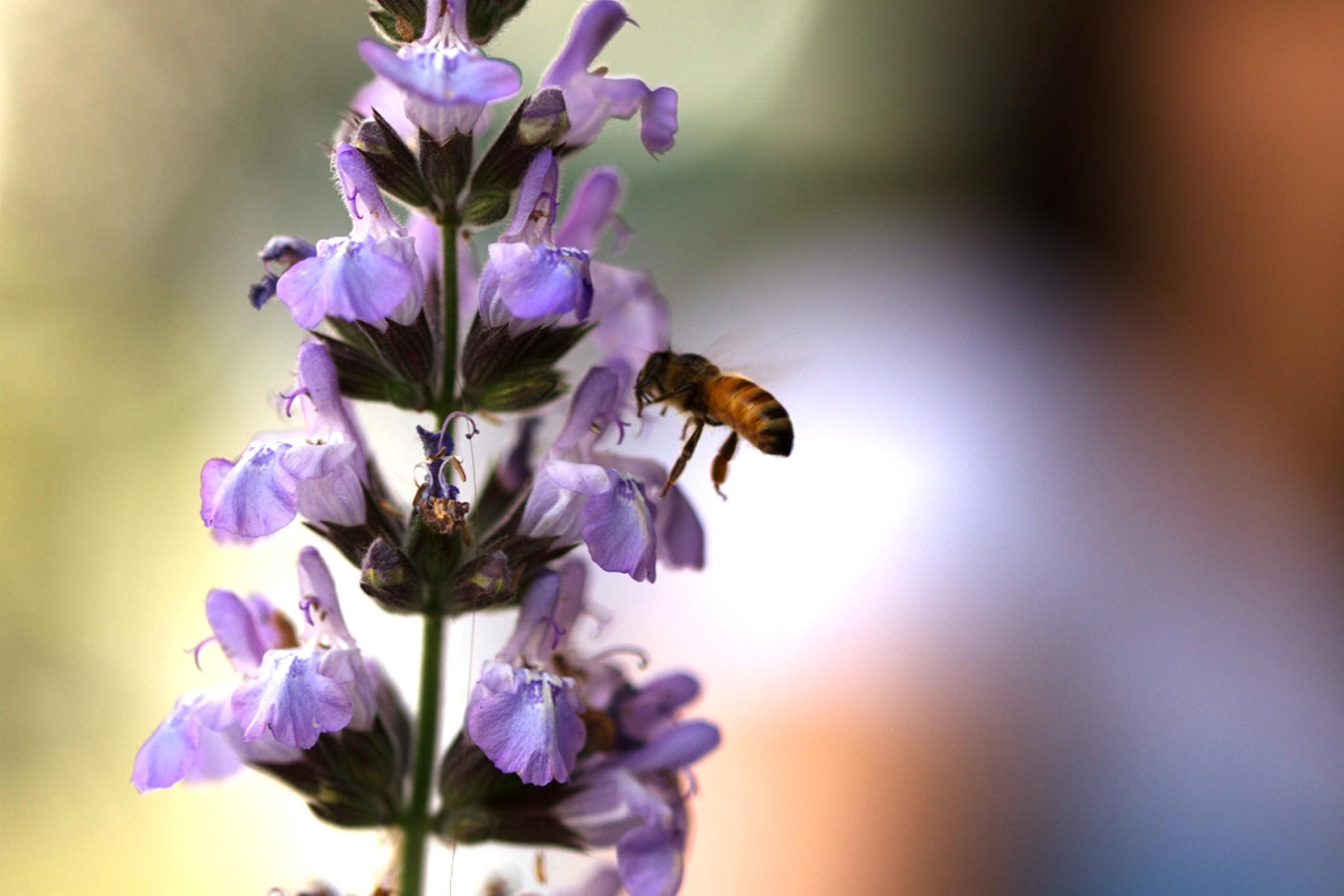 מועצת הדבש: מחקר חדש מגלה כי כמו בני אדם ישנן גם דבורים המורדות בדעות הקבוצה, סקרניות, ובעלות דעות עצמאיות
