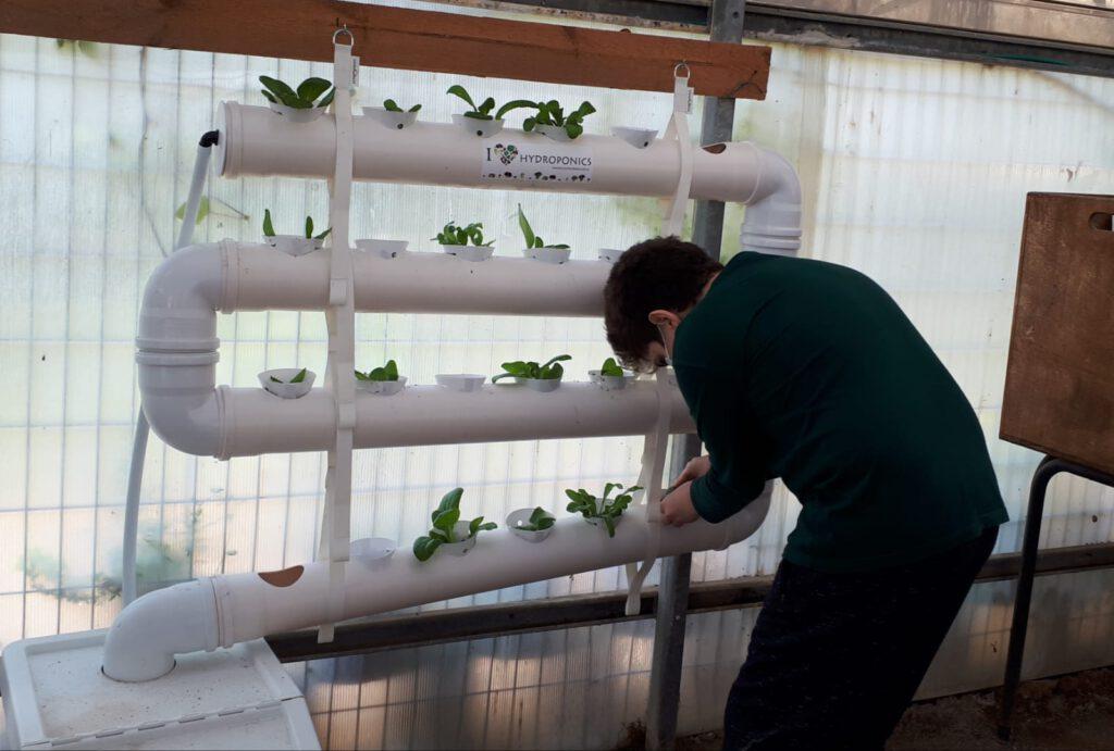 חממה לימודית בהר וגיא: גידול הידרופוני לצמחי בקצ'וי