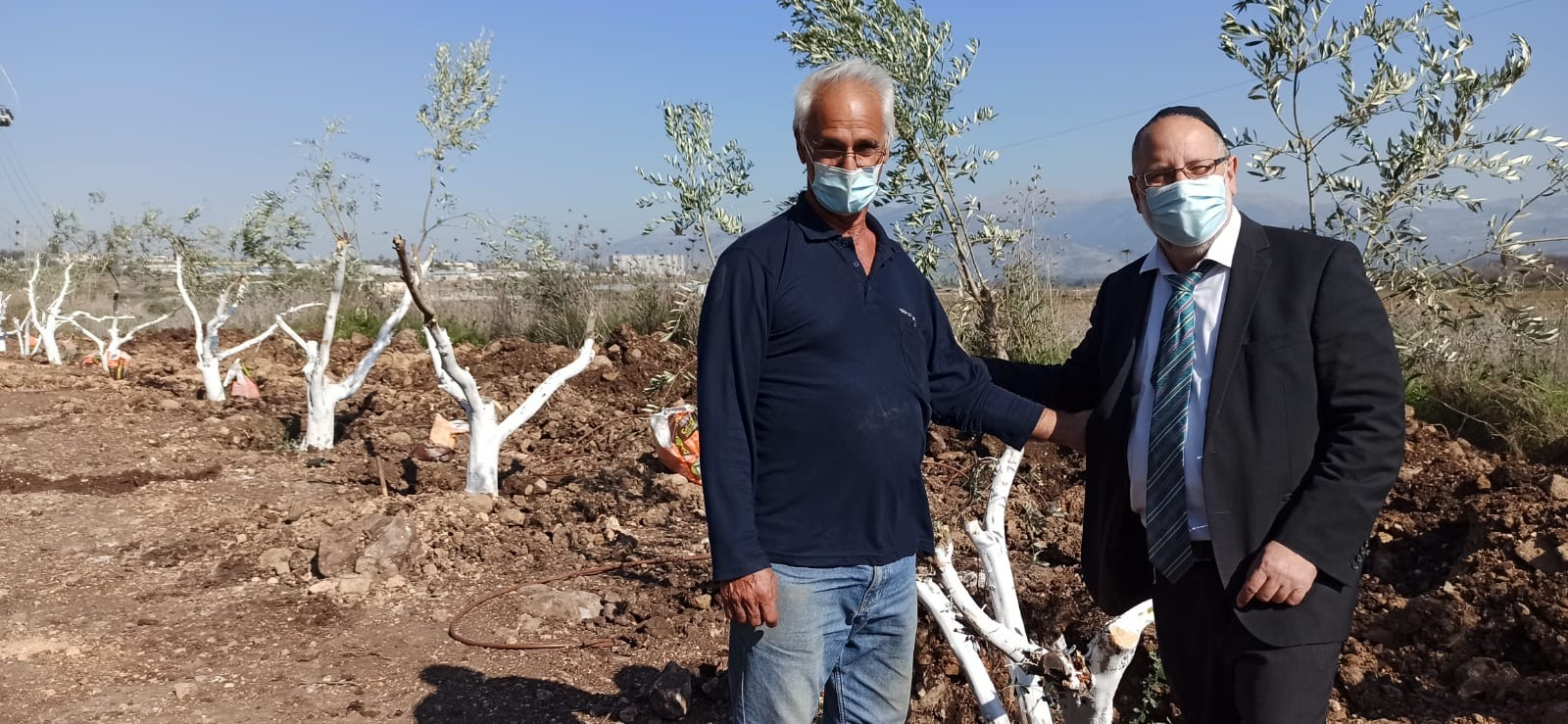 מנציחים את נפטרי הקורונה מהתפוצות בשדרת עצי זית חדשה בקרית שמונה