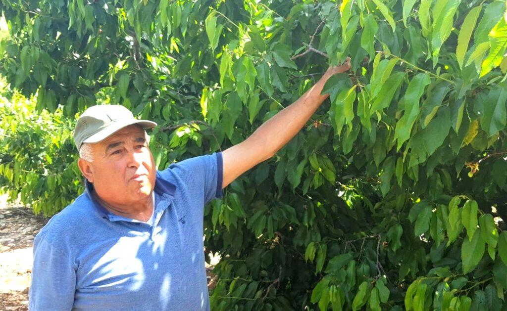 ארגון מגדלי הפירות בישראל: עקב חורף עם טמפרטורות גבוהות במיוחד וחוסר במנות קור צפויה ירידה של כ- 40% ביבול פירות הקיץ