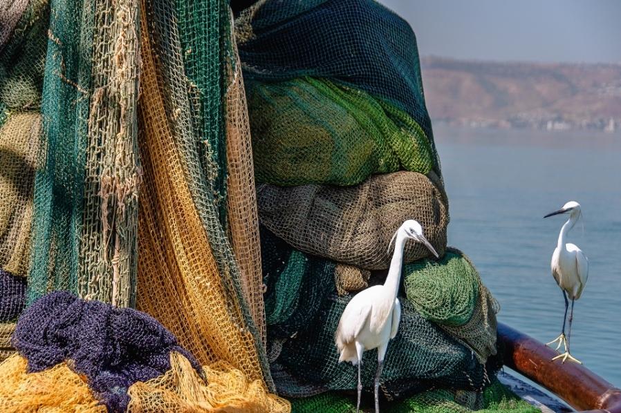 """""""דייג ליום אחד"""" – תערוכת צילום חדשה בכפר הנופש עין גב"""